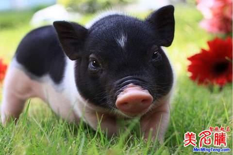 属猪的王姓女宝宝起名名字大全2019