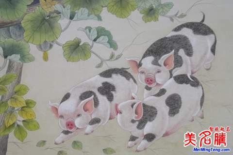 猪国画画法步骤