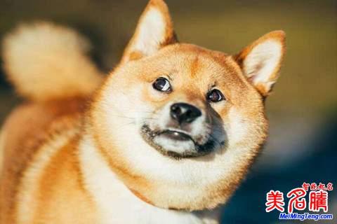 属狗的男宝宝起名最吉祥的方法大全2018