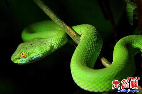 属蛇之人2017年全年运势