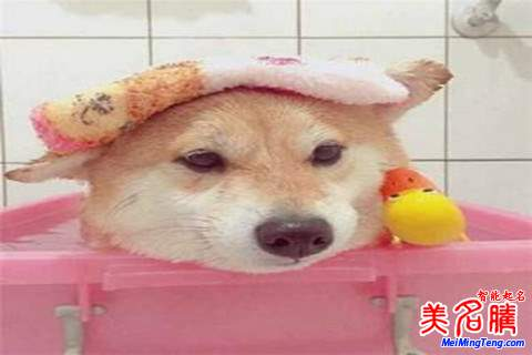 狗年新生女宝宝起名大全最新技巧2018