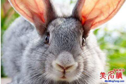 2017鸡年属兔之人运势详解